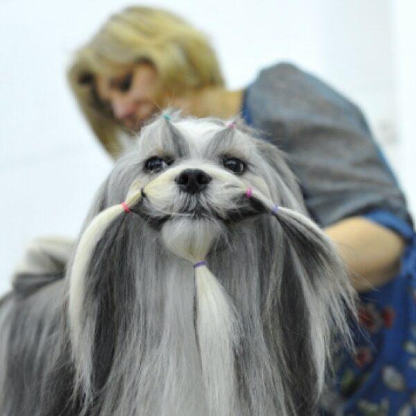 Выставка собак «Евразия»
