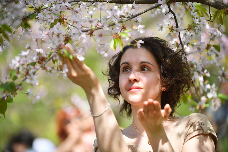 Где в Москве цветет сакура: самые красивые площадки