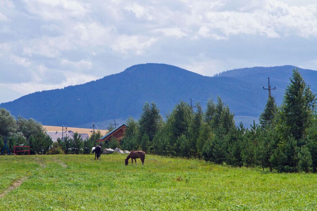 кони пасутся в горах